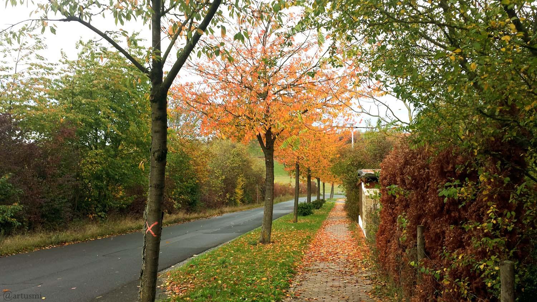 Das Wetter in Deutschland im Oktober 2019