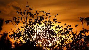 Sonnenuntergang in Eisingen am 25. Oktober 2019 um 17:54 Uhr