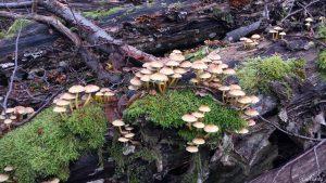 Pilze auf morschem Baumstamm im Wald