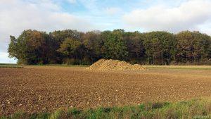 Zuckerrübenhaufen auf Acker am Waldrand