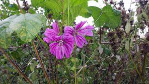 Violettfarbene Blüten am 5. November 2019 um 15:16 Uhr