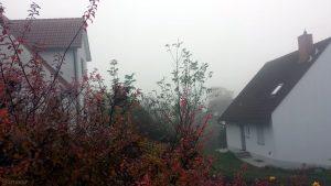 Wetterbild aus Eisingen vom 10. November 2019 um 10:47 Uhr