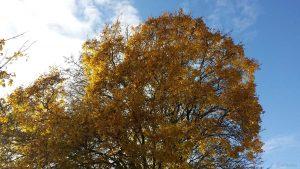 Bäume mit Herbstlaub am 12. November 2019