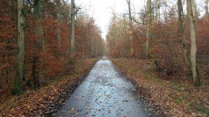 Geteerter Waldweg am 27. November 2019 im Irtenberger Wald