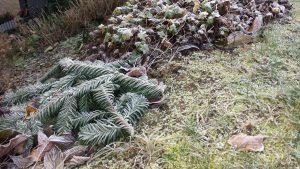Raureif auf Pflanzen am 5. Dezember 2019 um 15:21 Uhr