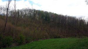 Blick zum Hügel mit Burgstall bei Kleinochenfurt am 14. April 2020