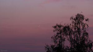 Schmale Mondsichel am 24. April 2020 um 21:11 Uhr erstmals nach Neumond sichtbar