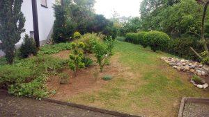 Unser Garten am 30. April 2020 nach Entfernen der letzten Kiefer