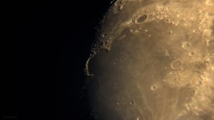 Goldener Henkel am 1. Juni 2020 um 21:25 Uhr am zunehmenden Mond