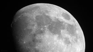 Goldener Henkel am 1. Juni 2020 um 21:35 Uhr am zunehmenden Mond