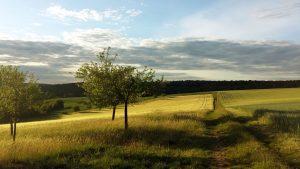 Felder und Feldweg am 7. Juni 2020 um 20:14 Uhr am Ortsrand von Eisingen