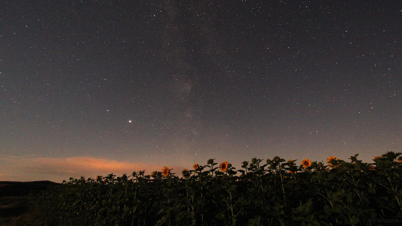 Milchstraße mit Jupiter und Saturn über einem Sonnenblumenfeld am 12. Juli 2020 um 02:23 Uhr in Eisingen