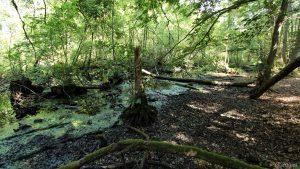 Naturdenkmal Tiergartensumpf am 13. Juli 2020