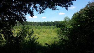 Blutsee-Moor bei Kist am 19. Juli 2020 - Mit einer Fläche von etwa 5,8 Hektar bietet es den größten Schwingrasen Unterfrankens