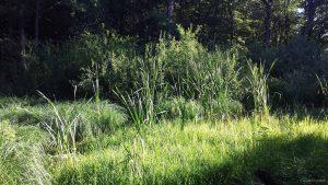 Naturdenkmal Schwemmsee mit Schwingrasen westlich von Höchberg am 31. Juli 2020