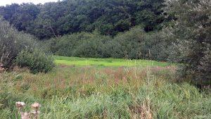 Naturdenkmal Längsee bei Waldbüttelbrunn am 24. August 2020