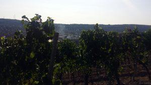 Blick vom Stein-Wein-Pfad auf die Staatliche Feuerwehrschule Würzburg