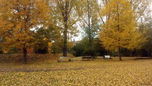 Herbstbild aus Randersacker am Main am 24. Oktober 2020