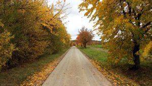 Herbstlaub am Flurweg zwischen Waldbüttelbrunn und Eisingen am 27. Oktober 2020