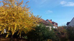 Wetterbild aus Eisingen vom 28. Oktober 2020