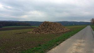 Zuckerrübenhaufen bei Waldbrunn