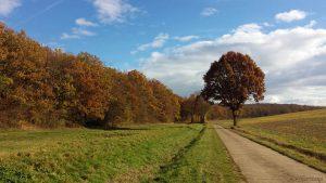 Feldweg entlang des Hirtenholzgrabens auf Eisinger Gemarkung