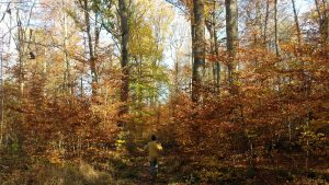 Spaziergang durch das Buchrainholz auf Waldbüttelbrunner Gemarkung