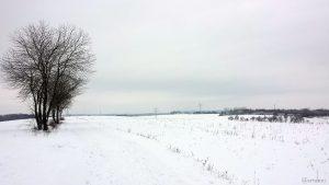 Wetterbild aus Eisingen vom 9. Februar 2021