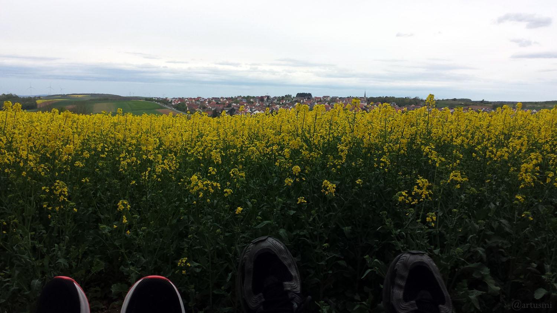 Rapsfeld bei Hettstadt im Landkreis Würzburg