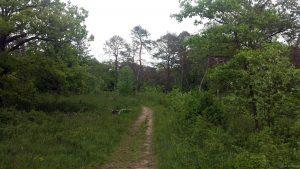 Naturschutzgebiet Höhfeldplatte bei Thüngersheim