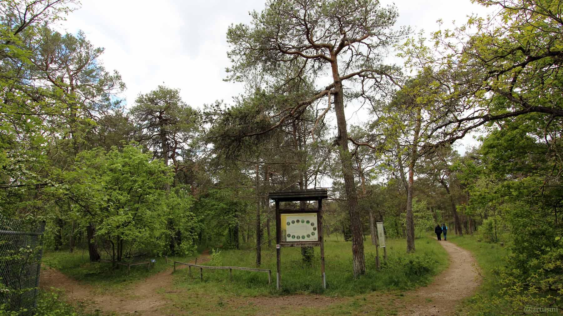 Orchideenpfad im Naturschutzgebiet Höhfeldplatte bei Thüngersheim