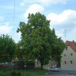 Grünfläche war ursprünglich der Ort des zweiten Friedhofs von Goßmannsdorf