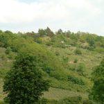 Blick vom Fußballplatz in Goßmannsdorf am Main hoch zum Panoramahöhenweg