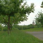 Wirtschaftsweg bei Goßmannsdorf am Main