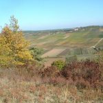 Blick vom Alten Berg auf die Weinberge bei Sommerhausen
