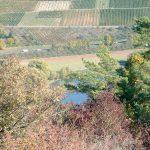 Blick vom Alten Berg auf den Main und die Weinberge bei Sommerhausen