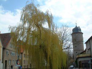Weißer Turm in Marktbreit im April 2004