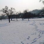 Winterlandschaft bei Goßmannsdorf am Main
