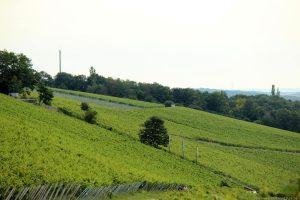 Weinberge am Würzburger Schalksberg