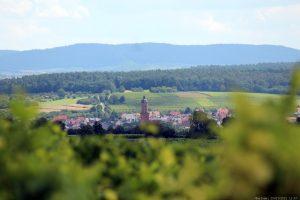 Blick von der Vogelsburg auf Volkach