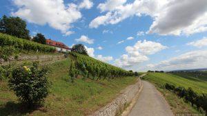 Weinlage Escherndorfer Lump unterhalb der Vogelsburg