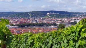 Weinberg am Würzburger Stein unterhalb Hans-Brandmann-Weg