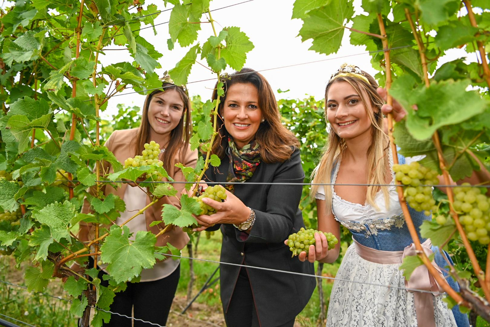 Michaela Kaniber mit der Fränkischen Weinkönigin Carolin Mayer (links) und der Nordheimer Weinprinzessin Chiara Krüger (rechts).