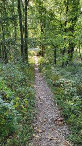 Weg vom Frankfurter Steinbruch zum terroir f Iphofen am Schwanberg