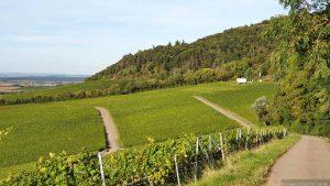 terroir f Rödelsee oberhalb der Weinlage Küchenmeister